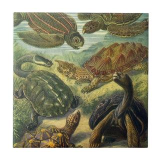 Vintage Sea Turtles and Tortoises by Ernst Haeckel Ceramic Tiles