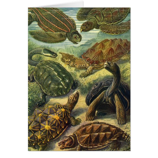 Vintage Sea Turtles Land Tortoise by Ernst Haeckel Card