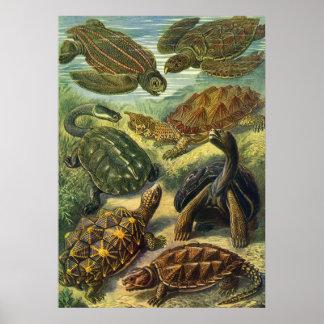 Vintage Sea Turtles Land Tortoise, Marine Animals Poster