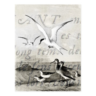 Vintage Seagulls Customized Retro Seagull Template Postcard