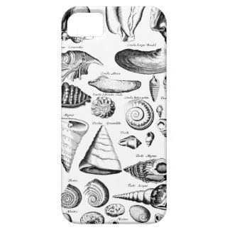 Vintage Seashells iPhone 5 Cover