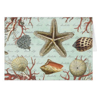 Vintage Seashells...note card