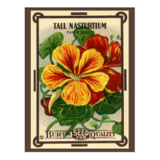 Vintage Seed Packet Label Art, Nasturtiums Postcard
