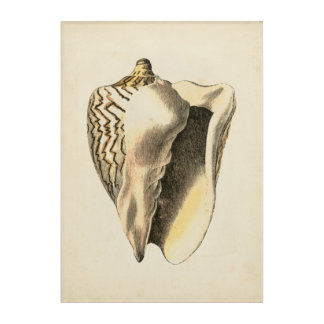 Vintage Sepia Conch Shell Acrylic Wall Art