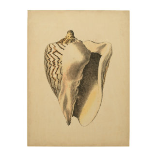Vintage Sepia Conch Shell Wood Wall Decor