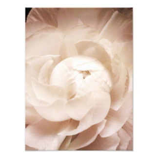 Vintage Sepia White & Cream Ranunculus Background Photograph