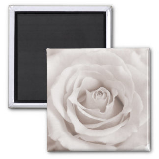 Vintage Sepia White & Cream Rose Background Custom Square Magnet