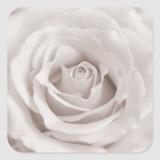 Vintage Sepia White & Cream Rose Background Custom Square Sticker