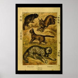 Vintage Serval Wild Cat Natural History Print