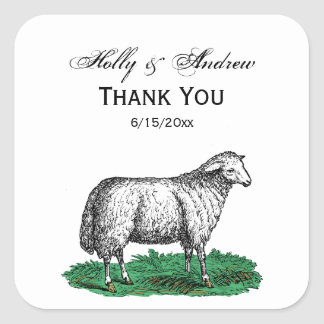 Vintage Sheep Ewe Farm Animals Drawing C Square Sticker