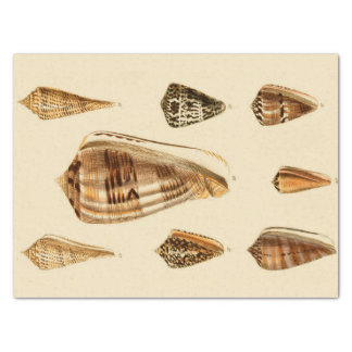 Vintage Shelling Tissue Paper