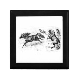 Vintage Shetland Ponies - 1800's Horse and Pony Gift Box