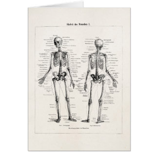Vintage Skeleton Human Anatomy Bone Bones Skull Card