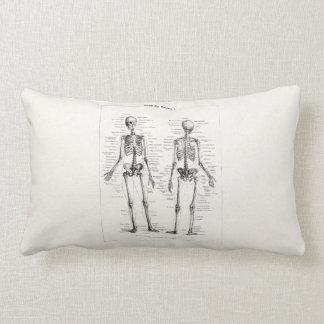 Vintage Skeleton Human Anatomy Bone Bones Skull Throw Pillow