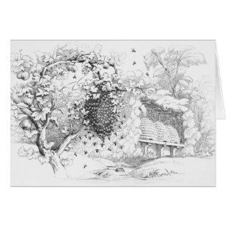 Vintage Skep Bee Hives Drawing Card