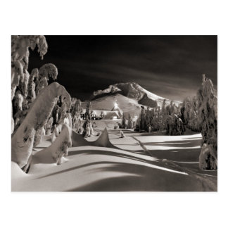 Vintage ski  image, Ski trail through the trees Postcard