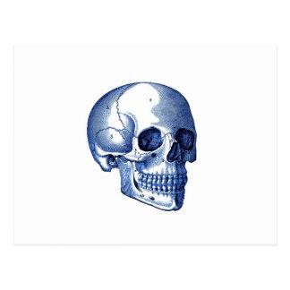 Vintage Skull Anatomy Postcard