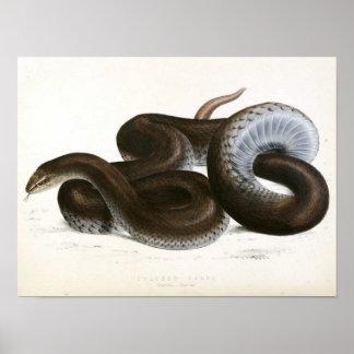 Vintage Snake drawing -Black-African Poster