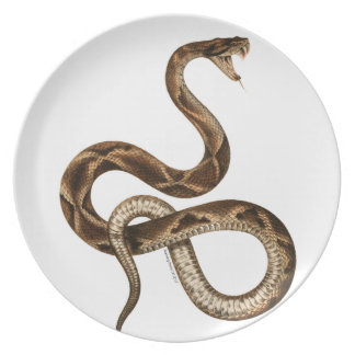 Vintage Snake Illustration Fangs Plate