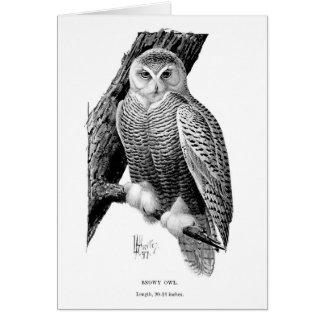 Vintage Snowy Owl (Blank Inside), Card