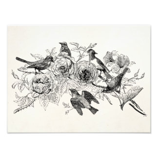 Vintage Sparrow Birds Personalized Sparrows Bird Photo Print