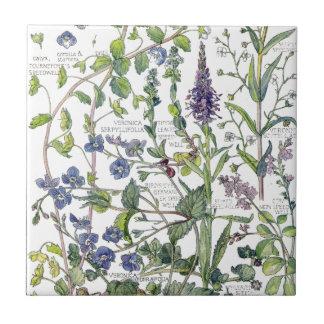 Vintage Speedwell Wildflower Flowers Tile