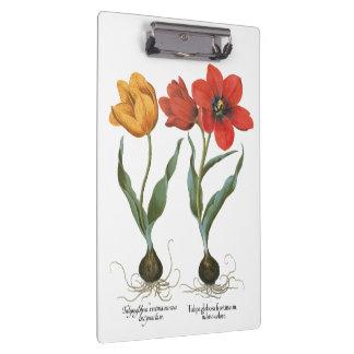 Vintage Spring Tulip Flowers by Basilius Besler Clipboards