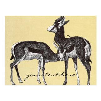 Vintage Springbok Postcard