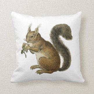 Vintage Squirrel Classic Illustration Cushion