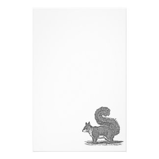 Vintage Squirrel Illustration -1800's Squirrels Stationery