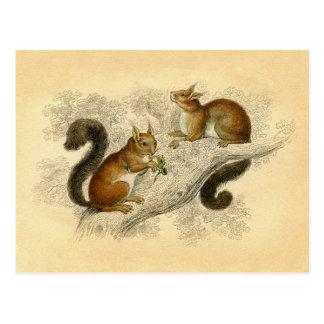 Vintage Squirrel Print Postcard