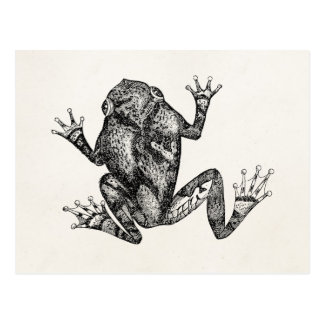Vintage Squirrel Tree Toad - Reptile Frog Template Postcard