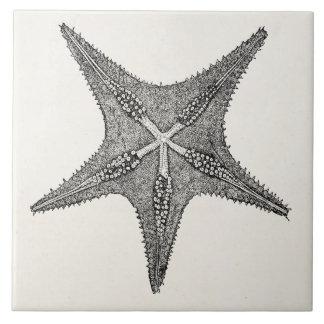 Vintage Starfish Antique Star Fish Template Tile