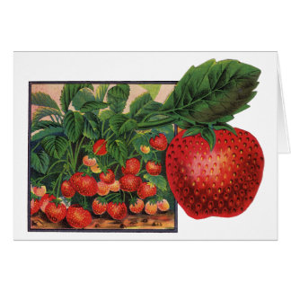Vintage Strawberries, Strawberry Plants on a Farm Card