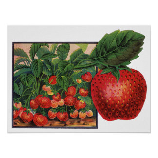 Vintage Strawberries, Strawberry Plants on a Farm Poster