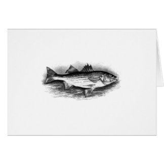 Vintage Striped Bass Illustration Card