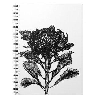 Vintage Style Botanical Waratah Illustration Note Book