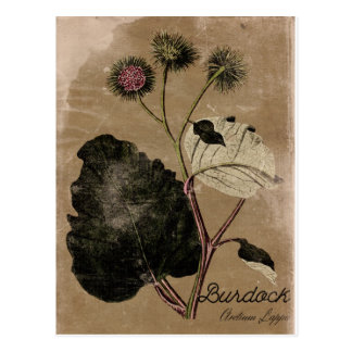 Vintage Style Burdock Flower Postcard