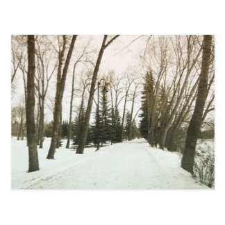 Vintage style card - trees in winter postcard