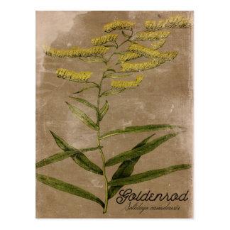 Vintage Style Goldenrod Flower Postcard