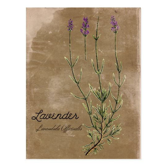 Vintage Style Lavender Flower Postcard