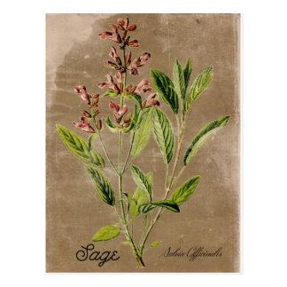 Vintage Style Sage Postcard