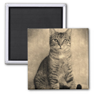Vintage Style Tabby Cat   Magnet