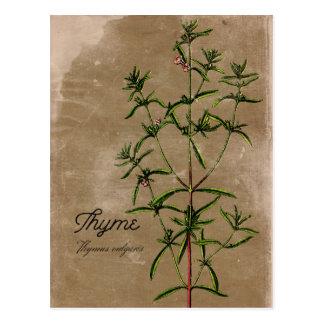 Vintage Style Thyme Herb Postcard
