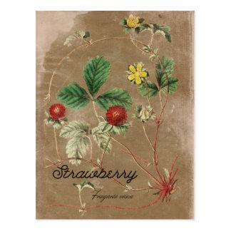 Vintage Style Wild Strawberry Postcard