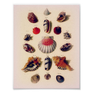 Vintage Sunset Seashell Collection Poster