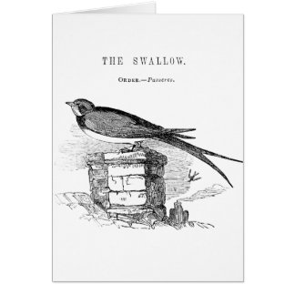 Vintage swallow bird card