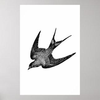 Vintage Swallow Illustration -1800's Antique Bird Poster
