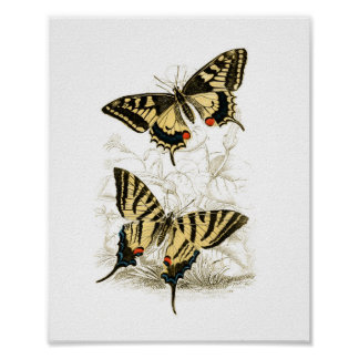 Vintage Swallowtail Butterfly Poster Print