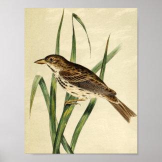 Vintage Swamp Swallow Poster